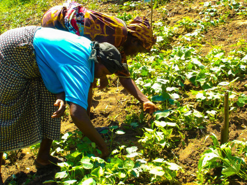 Linking Agriculture and Health Through the Gender Lens
